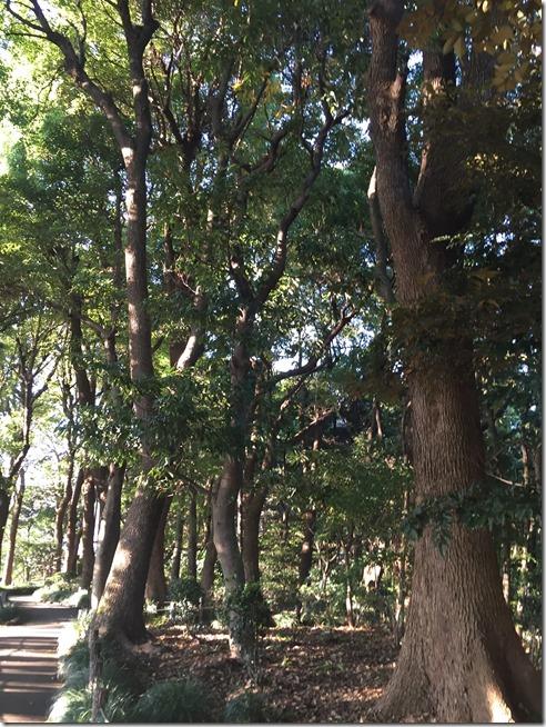 imperial garden 06