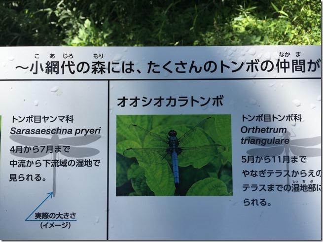 koajironomori (9)