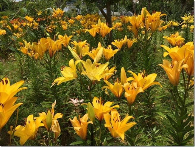 ofuna botanical garden (10)