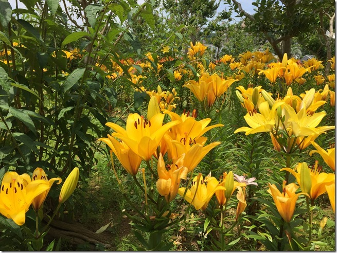 ofuna botanical garden (11)