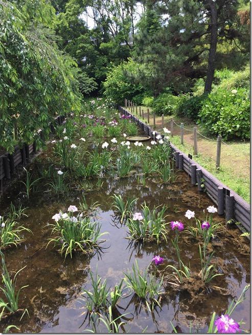 ofuna botanical garden (14)