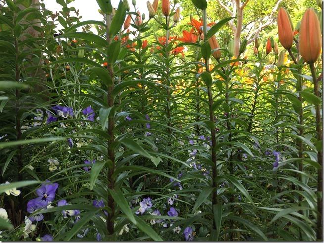 ofuna botanical garden (5)
