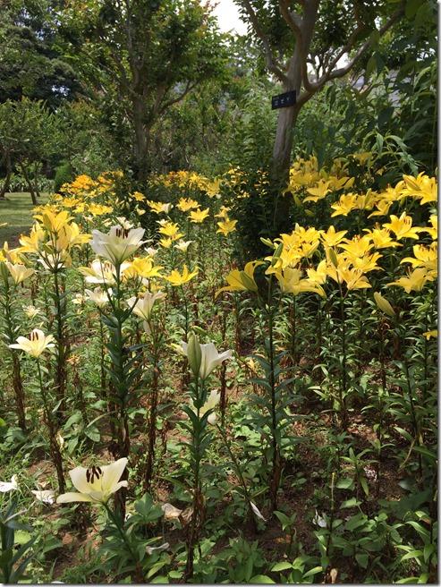 ofuna botanical garden (8)