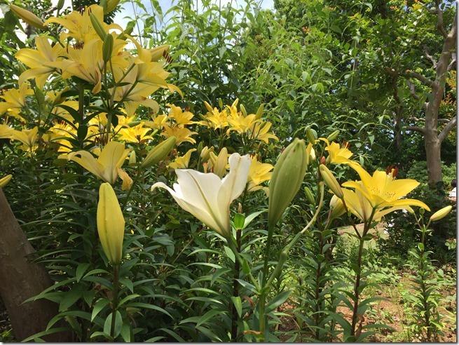 ofuna botanical garden (9)