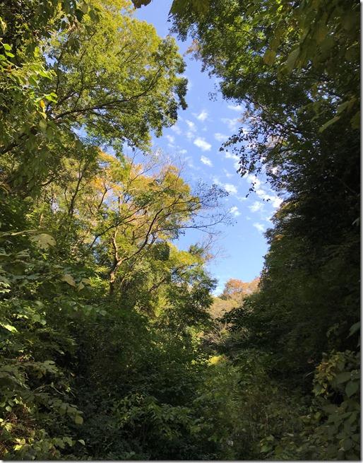 mini hike