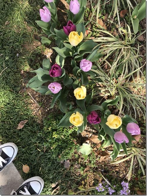 april chakushukai