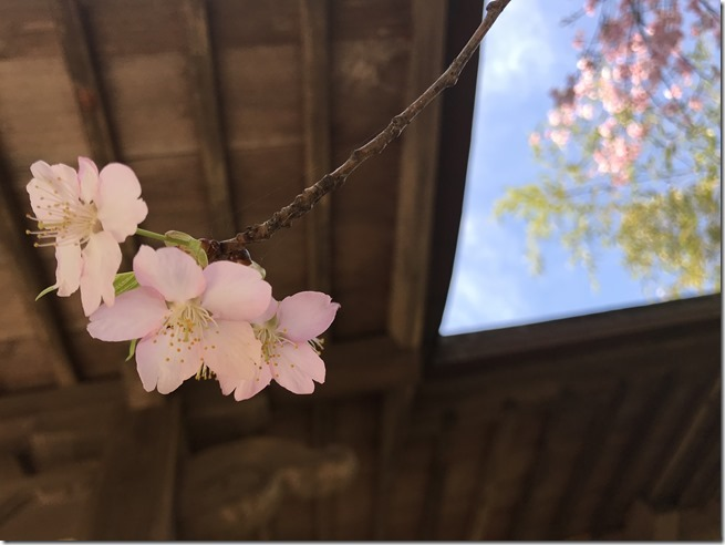 smell the plum blossoms (17)