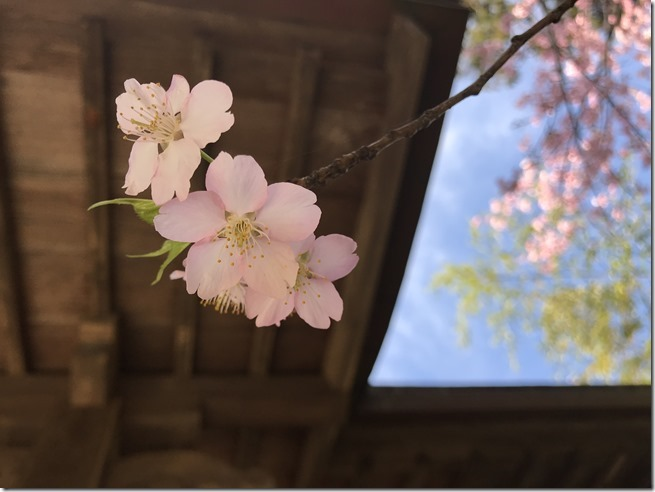 smell the plum blossoms (18)