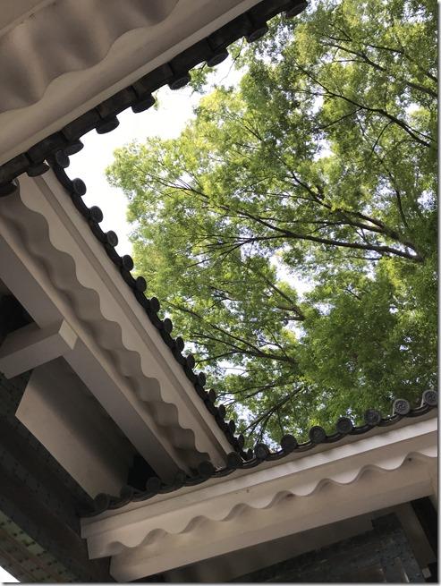 kitanomaru park (2)