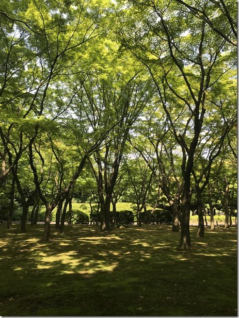 kitanomaru park (9)