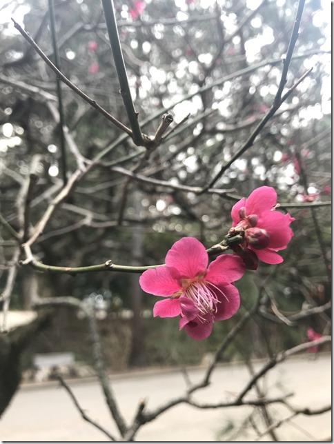 kitakamakura (1)