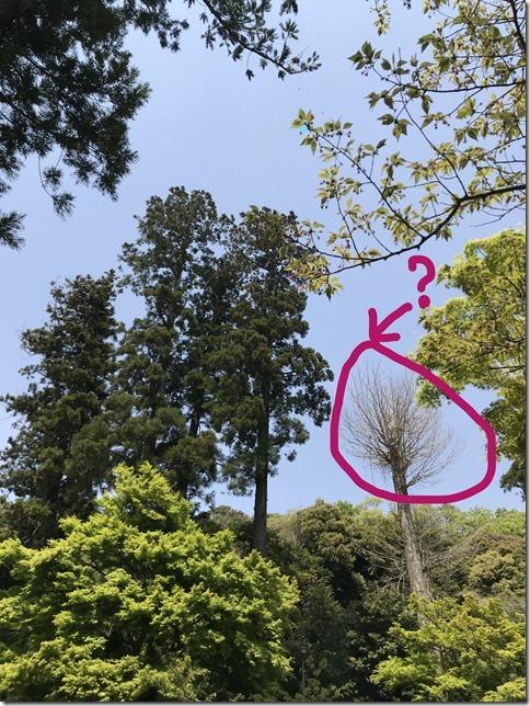 Inkedfresh green botanizing (8)_LI