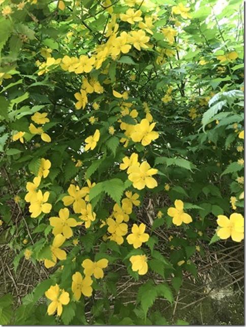 botanize (17)