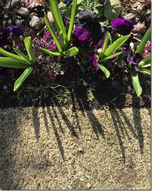 fragrant garden (10)