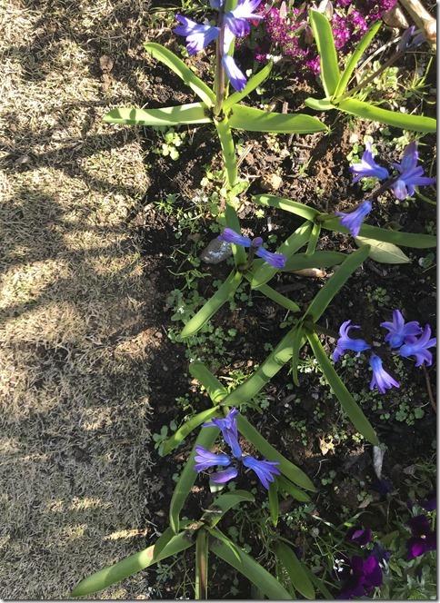 fragrant garden (12)