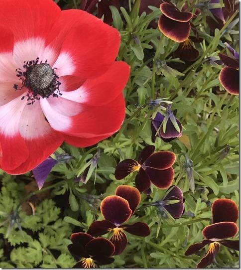 fragrant garden (14)