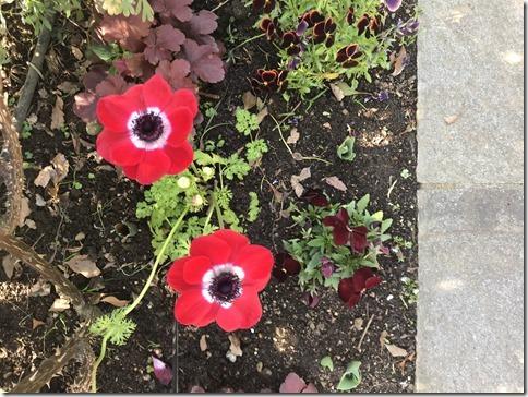 fragrant garden (1)
