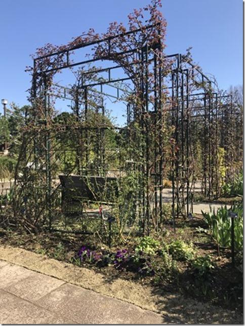 fragrant garden (4)