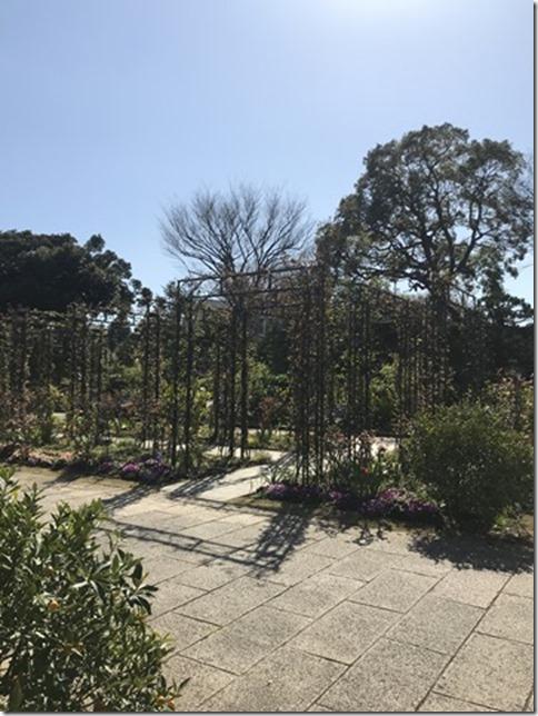 fragrant garden (5)