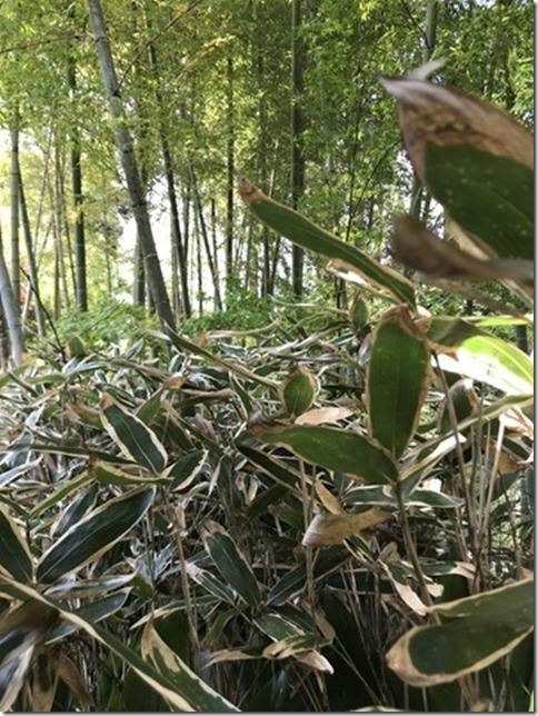fresh green botanizing (12)