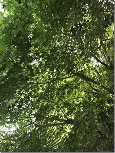 fresh green botanizing (13)