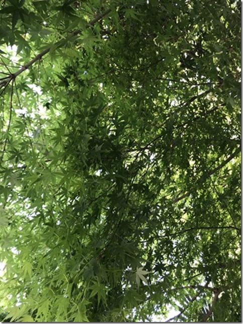 fresh green botanizing (14)
