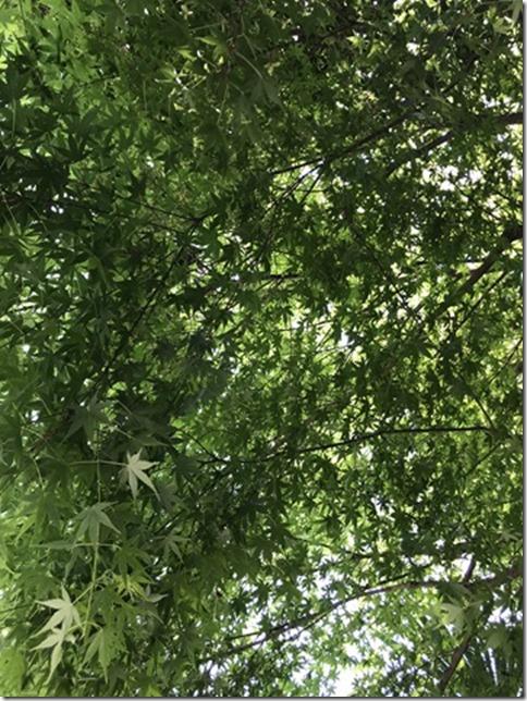 fresh green botanizing (15)