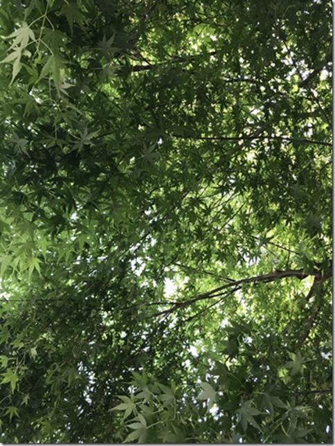 fresh green botanizing (16)