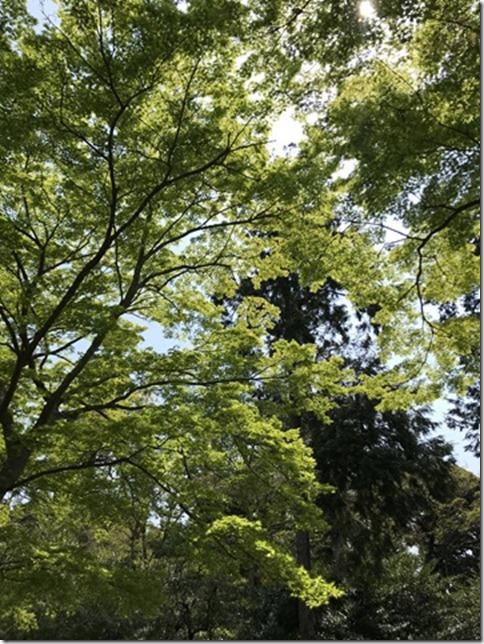 fresh green botanizing (3)
