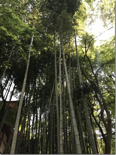 fresh green botanizing (4)