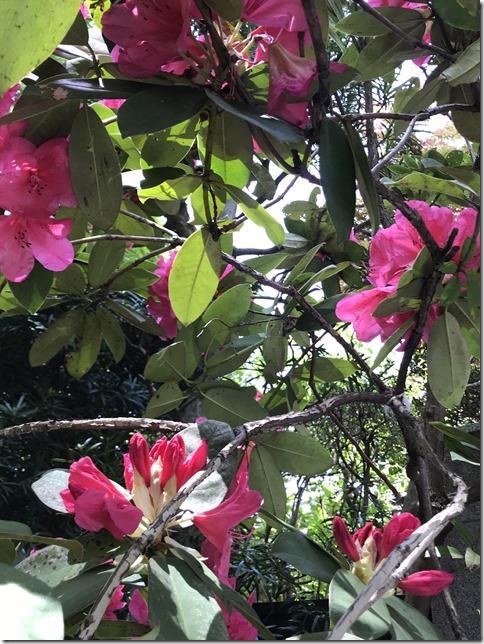 relentlessly botanizing (11)
