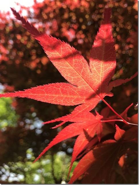 relentlessly botanizing (7)