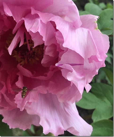 still botanizing (11)