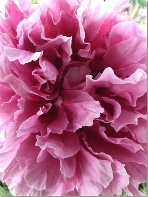 still botanizing (13)