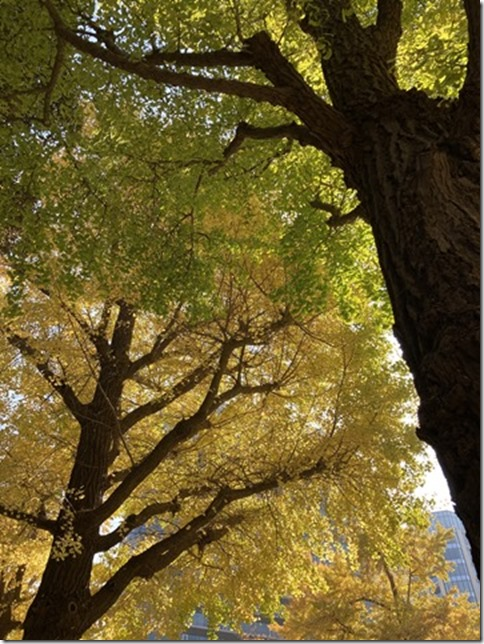 whimsical autumn (4)