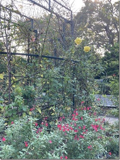 whimsical autumn (7)