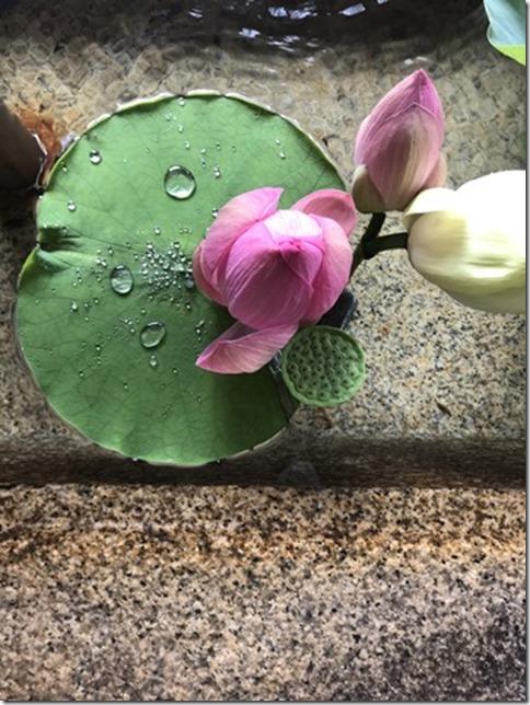 lotus flowers (11)