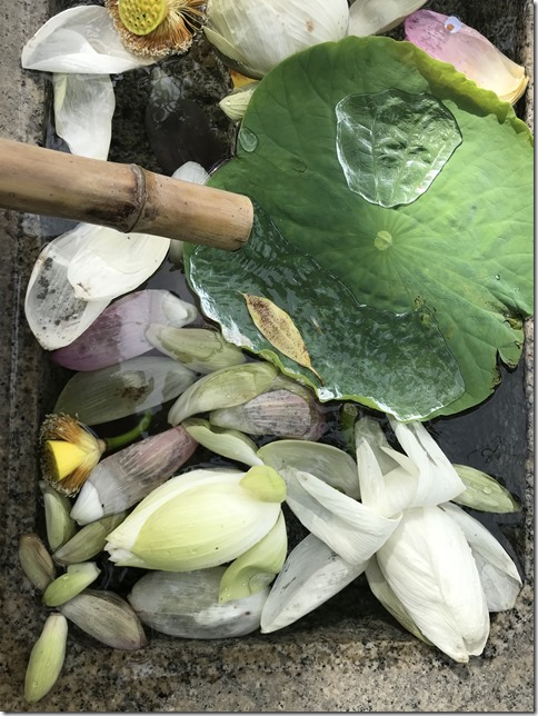 lotus flowers (2)