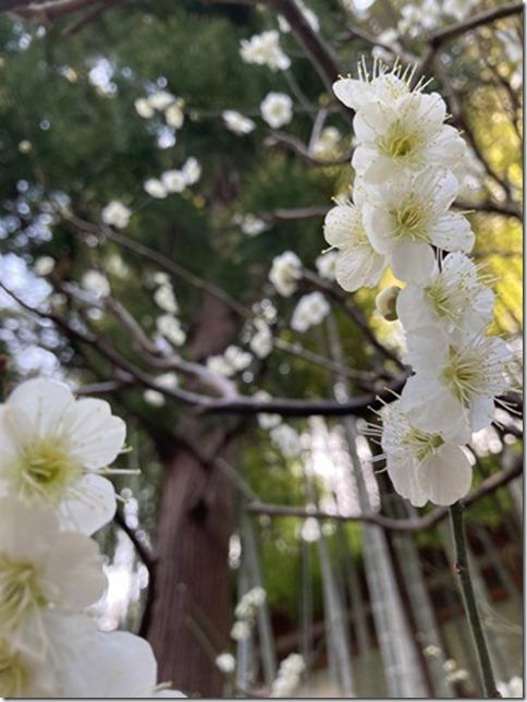 engakuji (1)