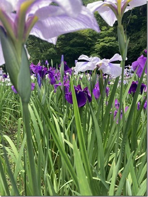 meigetsuin rear garden (3)