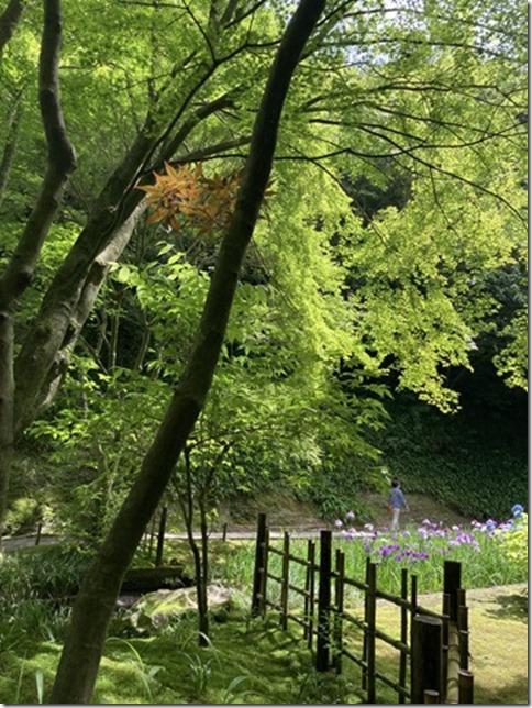 meigetsuin rear garden (5)